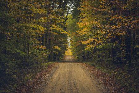 Rural Road in Fall