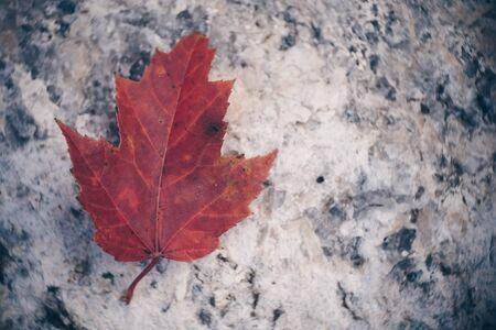 Maple Leaf on Granite 写真素材