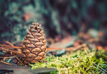 Vintage Look Red Pine Cone Stock Photo