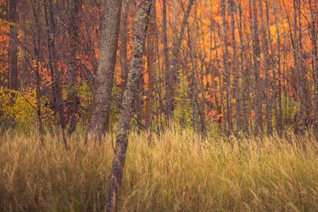 Hardwood Forest in Fall Stock Photo