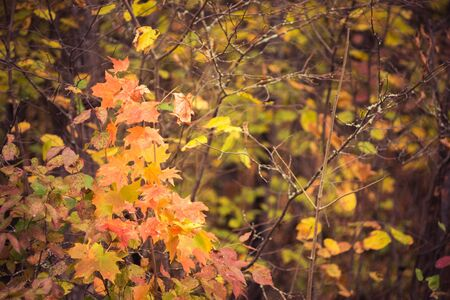 Hardwood Forest in Fall Colors Stock Photo