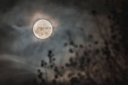 Dramatic Full Moon Over Forest