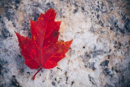 Red Maple Leaf on Granite Stock Photo