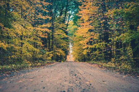 Fall Color Leaves and Forest Road Stock Photo