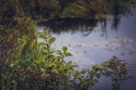 Aquatic Plants in Wetland