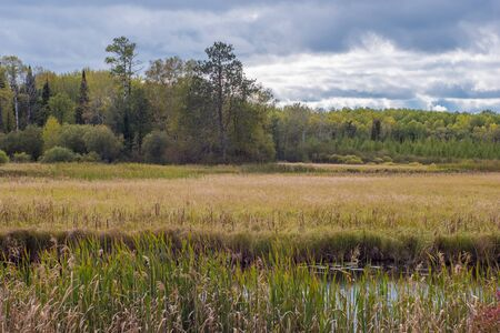 Wetland and Forest in Late Summer Stock Photo