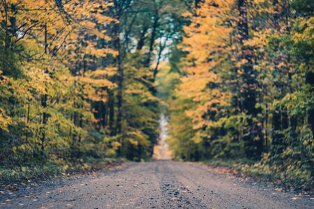 Rural Forest Road in Fall