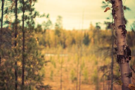 Boreal Forest Landscape in Fall Stock Photo