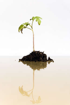 Young plant grows from the earth (conception of a growth) Stock Photo - 4831157