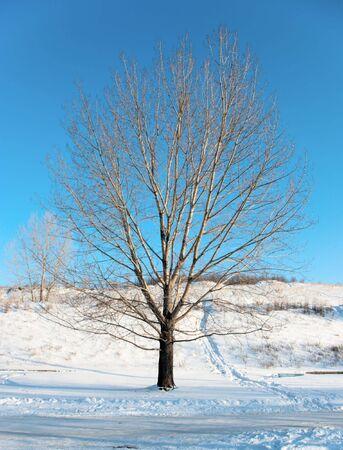 Beautiful tree winter landscape Stock Photo - 6418190