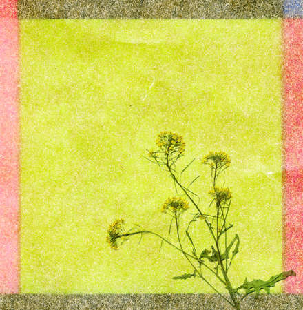 Color blossom background with plants photo