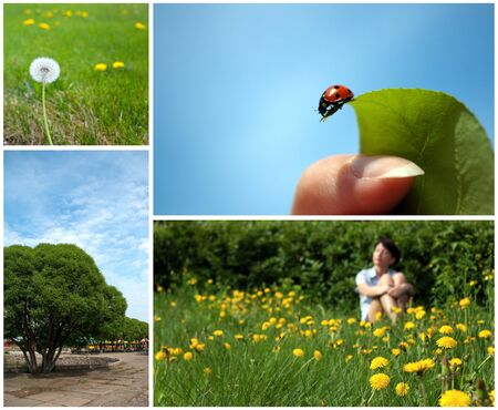 Summer collage with women relaxing, dandelion, tree and ladybug photo