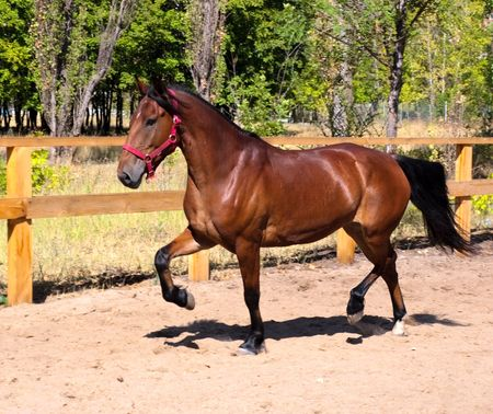 Beautiful horse was galloping fast across field along fence photo