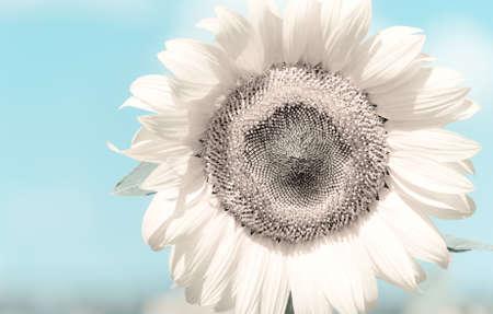 Delicate flower Stock Photo - 14538463