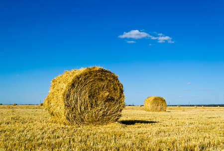 Mown wheat field, large round bales of hay, field of corn in the distance Stock Photo - 14796685