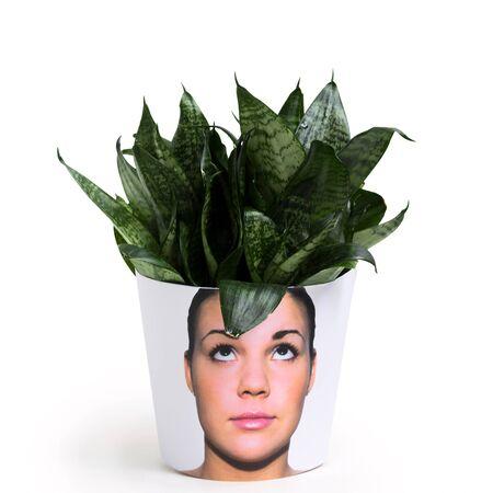 Flower heads of photo