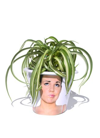 humorous: Variegated pot plant in fun container