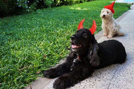 couple of cute dogs waiting for halloween in their costumes