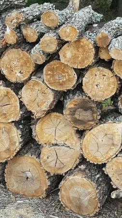 Wood Stack 版權商用圖片
