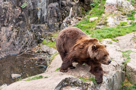 Bears are carnivoran mammals of the family Ursidae. They are classified as caniforms, or doglike carnivorans.