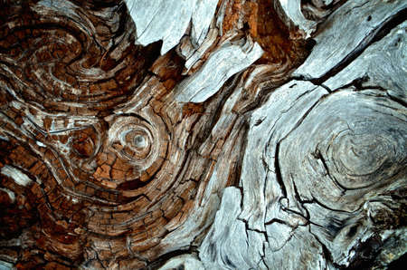 Closeup shot of a swirling red and brown pattern of tree bark. Zdjęcie Seryjne