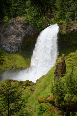 amongst: Sahalie Waterfall in Oregon amongst the mossy green forest.