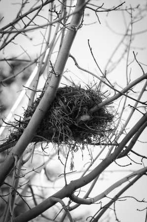 sparse: A black and white shot of a bird nest in a sparse tree Stock Photo
