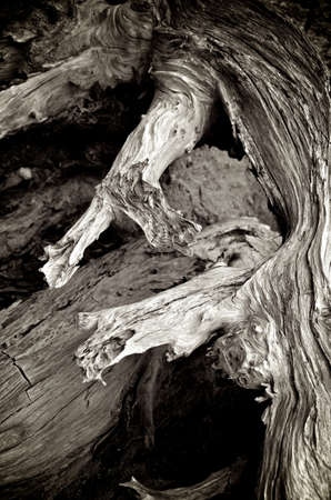scraggly: Black and white shot of some driftwood