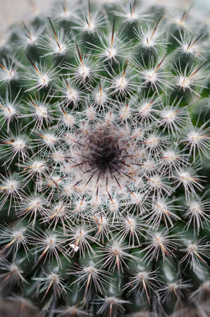 Macro shot of the center of a cactus