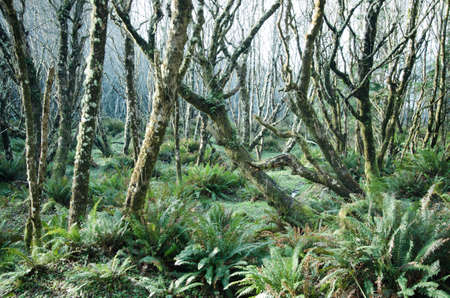 eerie: An eerie forest shot with moss covered trees and fern ground cover