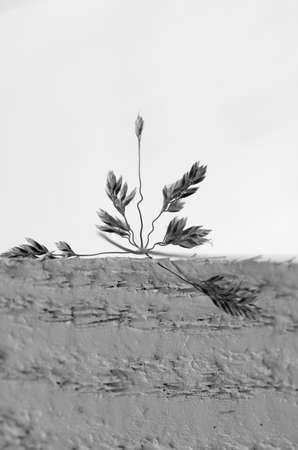 stark: Stark macro of grass on a white background