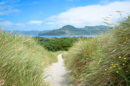 A winding trail down to the beach at Nehalem Bay