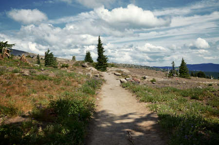 pacific crest trail: A portion of the pacific crest trail