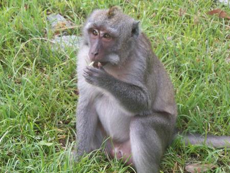 これは猿の写真