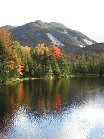algonquin mountain trail foliage Stock fotó