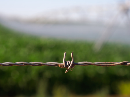 fencing wire: Close up of barbed wire fence