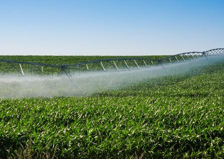 pivot: Irrigation pivot on a green field