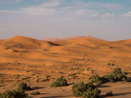 dromedaries: Dromedaries on the Sahara Desert Stock Photo