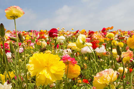 Fresh spring flowers in vivid blooming colors and sizes Stock Photo