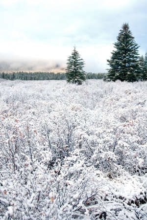 Snow covered landscapes in winter just in time for  and holiday season photo