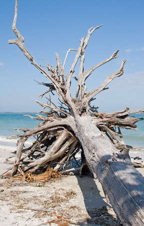 driftwood: Beach and ocean scenics for vacations and summer getaways