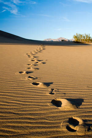 Footprints in the desert or beach sand photo