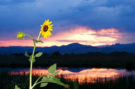 Brilliant rural country sunset on the front range of Colorado USA Stock Photo - 5452364