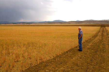 콜로라도 미국의 전면 범위에 밀 필드 스톡 콘텐츠