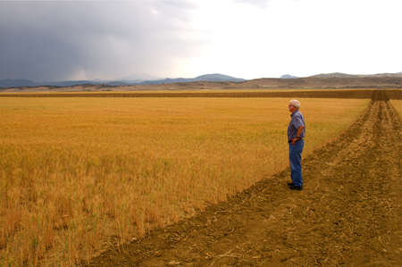Wheat fields on the front range of Colorado USA Stock Photo