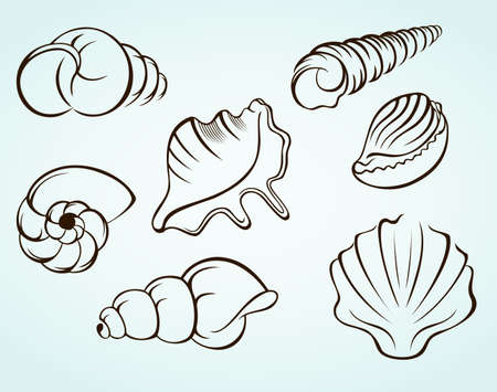 mollusc: Seashells