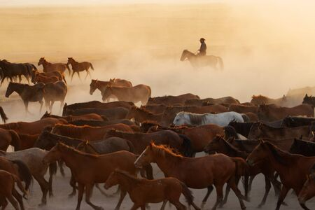Wild horses running at sunset Stock fotó