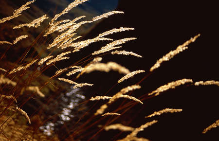 autumnally: Dried grasses in a austrian mountain valley
