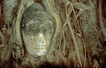 Head of Buddha statue in Ayutthaya History Parc Stock Photo - 2828589
