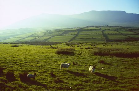 Green meadows in County Kerry, Ireland photo